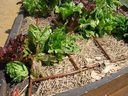 beautiful vegetable garden drip irrigation design garden design
