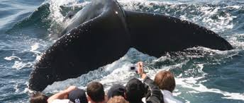 Whale Watches Cape Cod - cape cod activities for your wedding guests cape cod chamber of