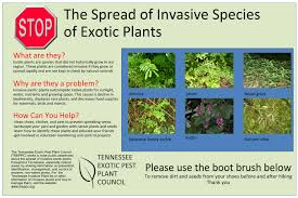native plants in landscape management initiatives u2013 tennessee invasive plant council