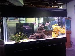 Aquarium For Home Decoration Client Aquariums Good Water Aquatics