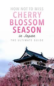 Cherry Blossom Map Best 25 Cherry Blossom Japan Ideas On Pinterest Cherry Blossom