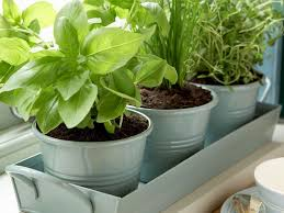29 herb gardening in pots kitchen herb pots 3 x ceramic herb plant