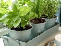 garden pots design ideas 34 herb garden pots indoors gallery that really surprising to