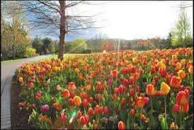 thanksgiving point tulip festival coupons 2018 krazy coupon