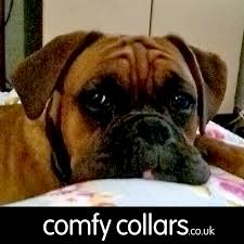 Buster Comfort Collar Buster Collars