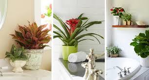 Plants Home Decor Idea Garden Blog Costa Farms