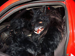 Werewolf Costume Halloween Costumes