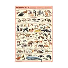educational nature u0026 science posters animal insect u0026 wildlife