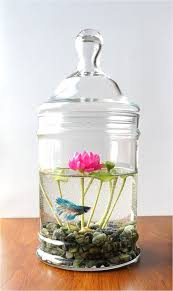 Betta In Vase Betta Lotus Jar Please No More Comments The Lotus Not The Tank