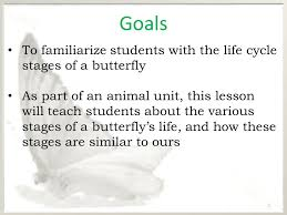 butterfly introduction to the butterfly cycle ppt