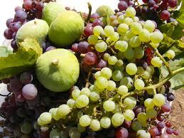 edible california native plants california native plants re nourishment