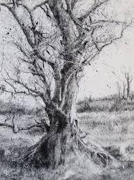 181 best tree studies images on drawings drawings