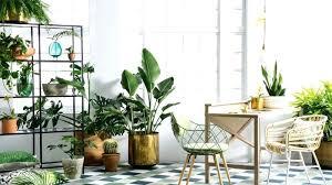 indoors garden garden mums indoors hydraz club