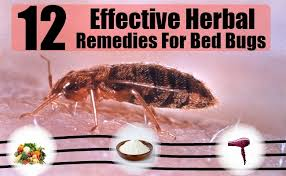 natural bed bug remedies 12 herbal remedies for bed bugs how to cure bed bugs naturally