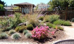 california native plants list solutions
