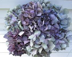Dried Hydrangeas Dried Hydrangeas Etsy