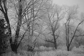 frosted trees photograph by jason king