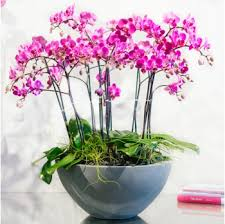 purple orchids orchid plants shop empty vase