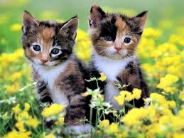 beautiful kittens in the world