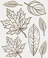 the 25 best leaves template free printable ideas on pinterest