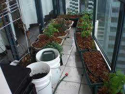 urban green survival balcony garden
