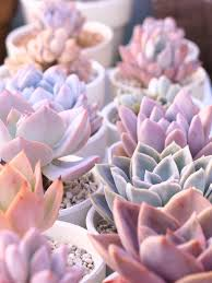 succulents color pastels color my world with love pinterest