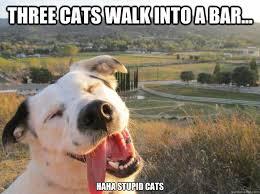 Stupid Cat Meme - three cats walk into a bar haha stupid cats joking dog
