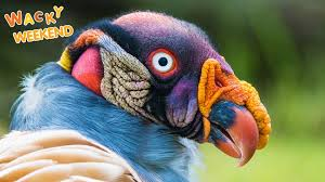 birds images Year of the bird jpg