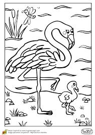 dessin à colorier d u0027une maman flamant rose et de son petit