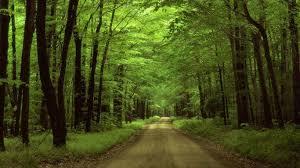 Pennsylvania landscapes images Forest woods landscape pennsylvania scenic wood wonder forest jpg