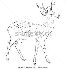 vector sketch dappled deer side view stock vector 227598889