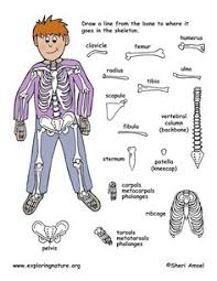 Human Anatomy Skeleton Diagram Skeleton Digital Scrapbook Kit Can Be Printed And Made Into