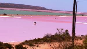 pink lake australia meteo web