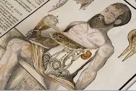 He Made Accurate Drawings Of The Human Anatomy How Flap Illustrations Helped Reveal The Body U0027s Inner Secrets