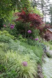 1628 best ornamental grass perennial images on