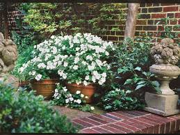 impatiens flowers impatiens how to grow these annual flowers southern living