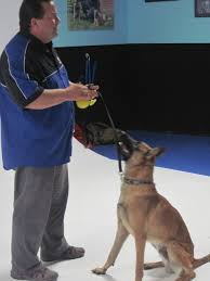 belgian sheepdog michigan michael burkey and michigan dog trainers dispatches from the