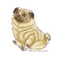 pudgy pug