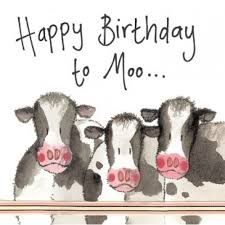 Cow Birthday Card Cows