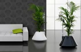 plants decoration at home home decoration plants plants adorable