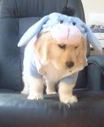 Disney Halloween Costumes Dogs 28 Disney Dog Costumes Images Dog Costumes
