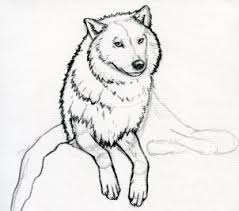 how to sketch a wolf arctic wolf step by step forest animals