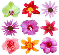 the meaning behind colors of flowers foodland
