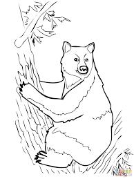 american black bear coloring kids coloring