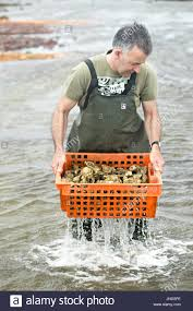 seafood in bag stock photos u0026 seafood in bag stock images alamy