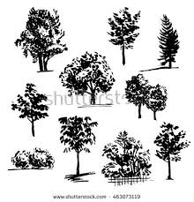 tree sketch drawn ink silhouettes trees stock vector 448477099