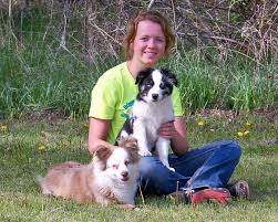 south dakota australian shepherd rescue prairie hill morgans our australian shepherds