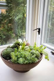 indoor succulent garden 10 diy indoor herb garden ideas and