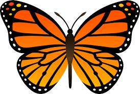 pngimg com uploads butterfly butterfly png1048 png