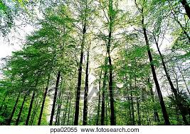 stock image of tree wood wood forest plants some trees